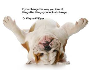 change how you look - upside down bulldog